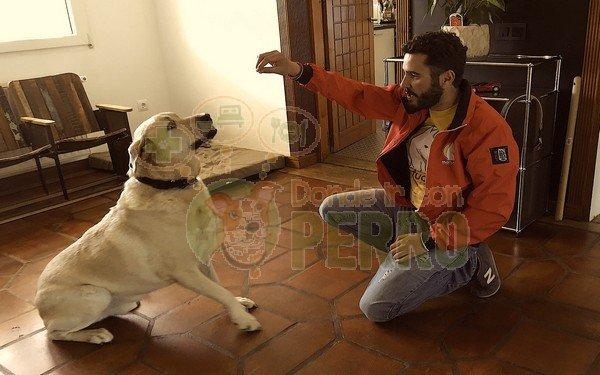 Matucan servicios caninos (1)