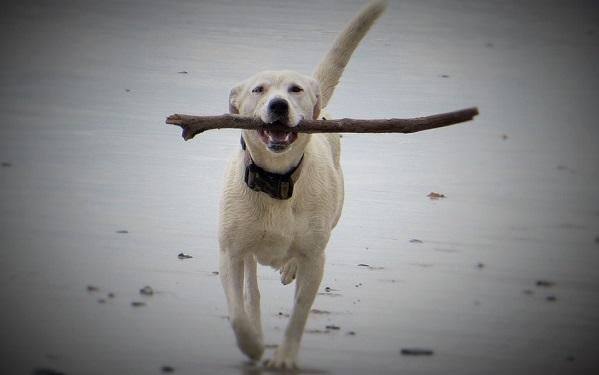 playa canina en Mallorca