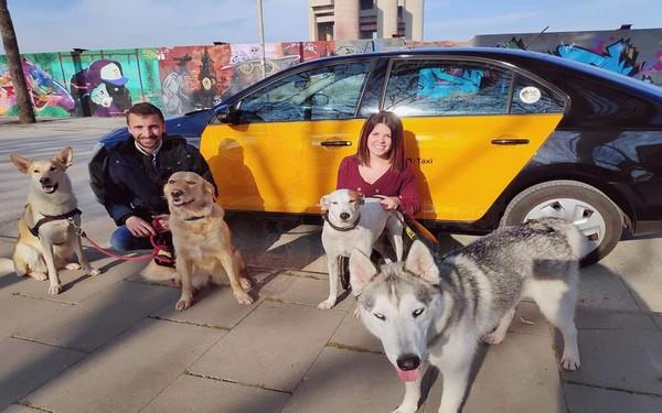 Taxi para perros Mascotaxi.