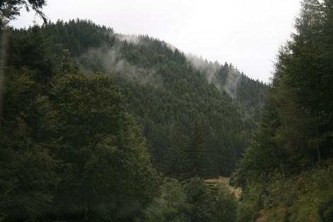 selva negra 2007