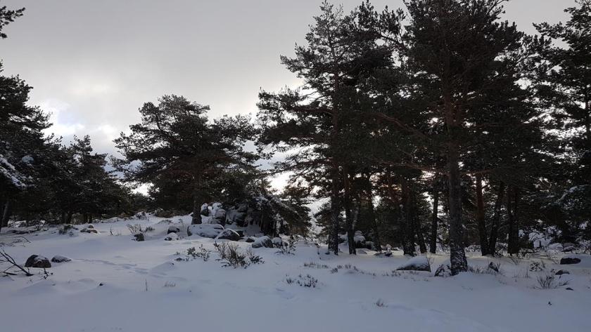 20160117_124506 (Copy) nieve
