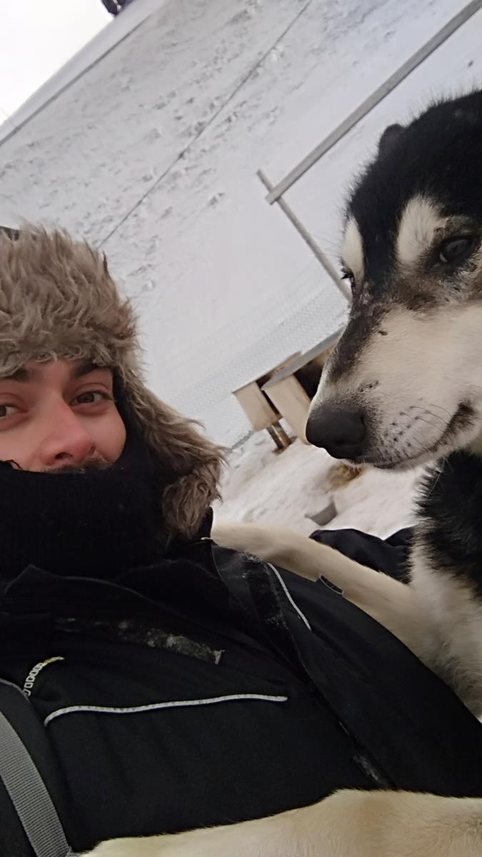 huskies (2)
