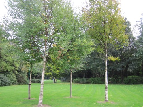 trees dublin (4)