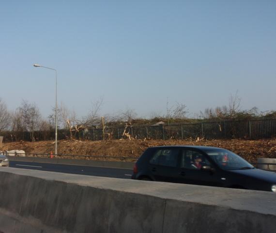 motorway-roads-dublin tree felling removal