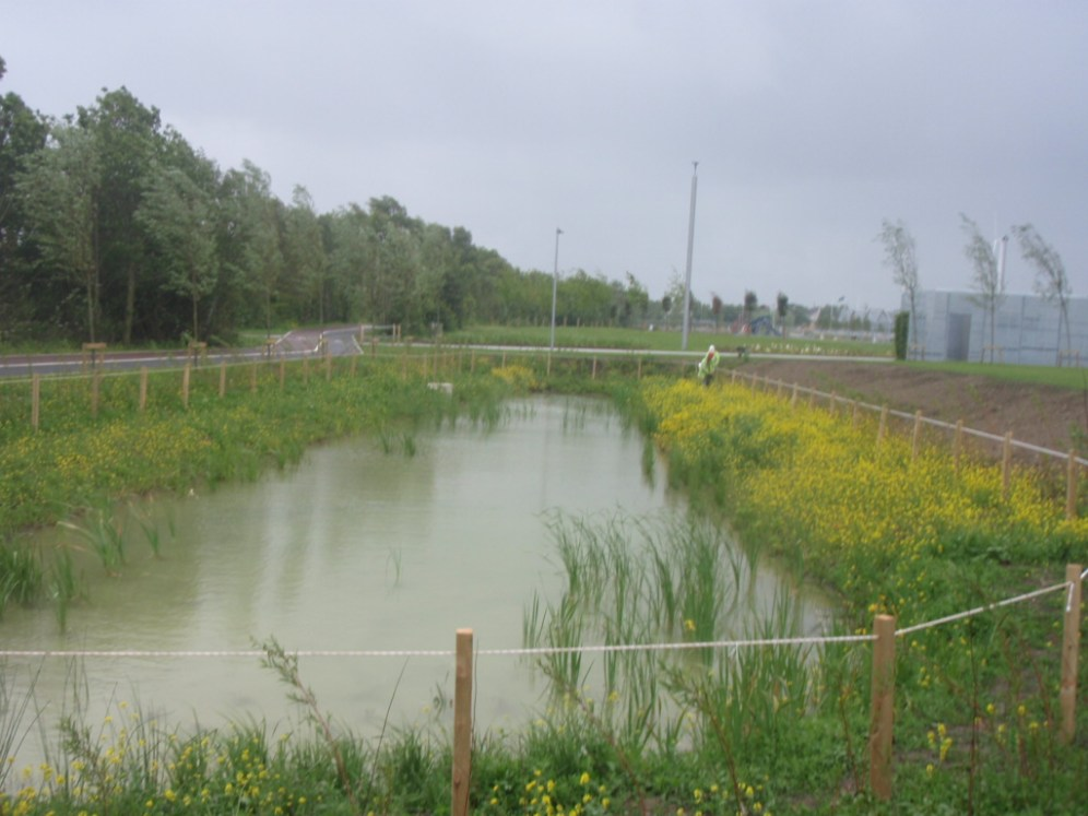 fr-collins-park-wetland