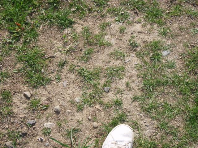 my lawn wont grow