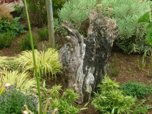 small-garden-ideas-old timber stump