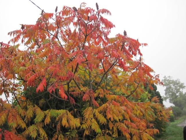 autumn-colour-23