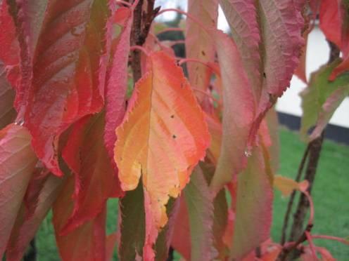 autumn-colour-25