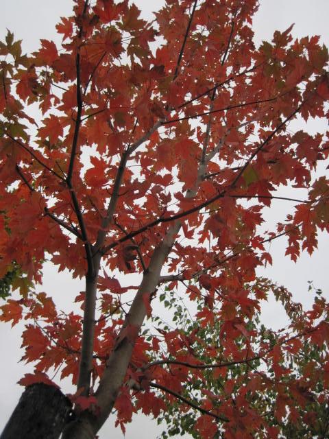 autumn-colour-27