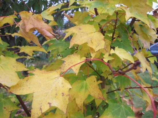 autumn-colour-30