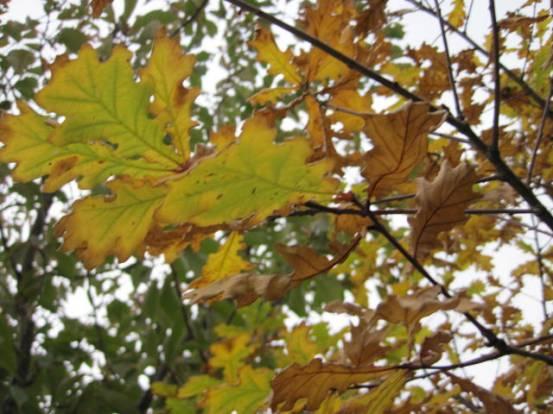 autumn-colour-34