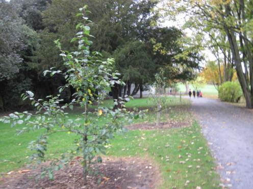 kilkenny-castle-gardens-50