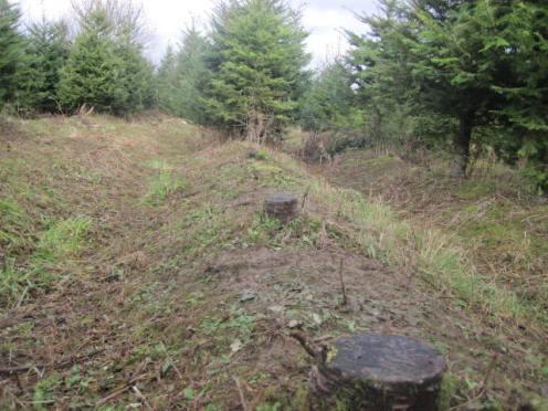 christmas-tree-farm-12