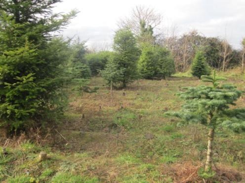 christmas-tree-farm-13
