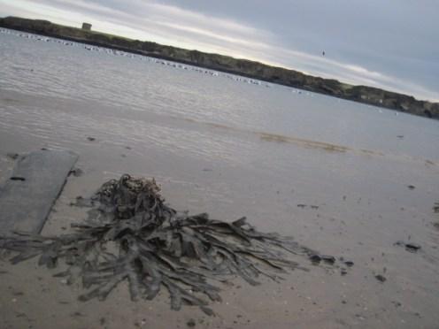 loughshinny beach (12)