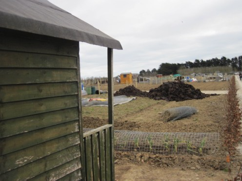 donabate allotments (7)