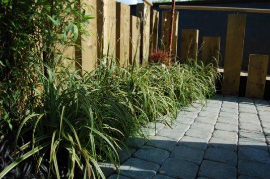 Carex Rekohu Sunrise