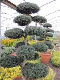 buy plants online ireland (3)