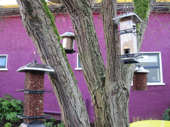 bird feeders in gardens