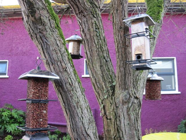 bird feeders in gardens