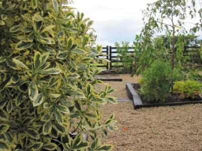 donegan garden (2)