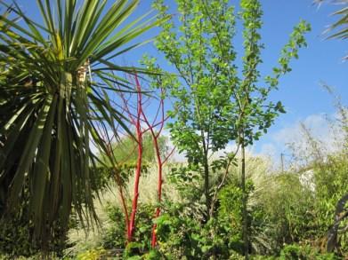 red dead tree (20)