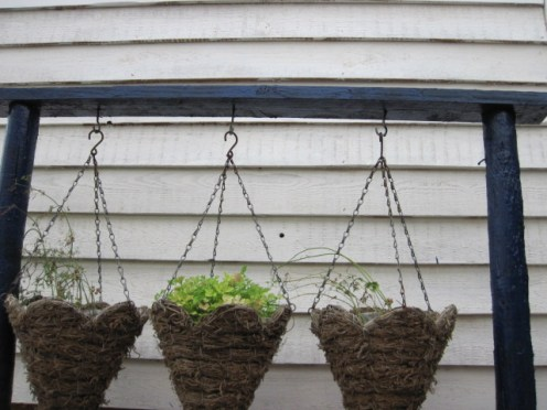 hanging basket alternate (2)