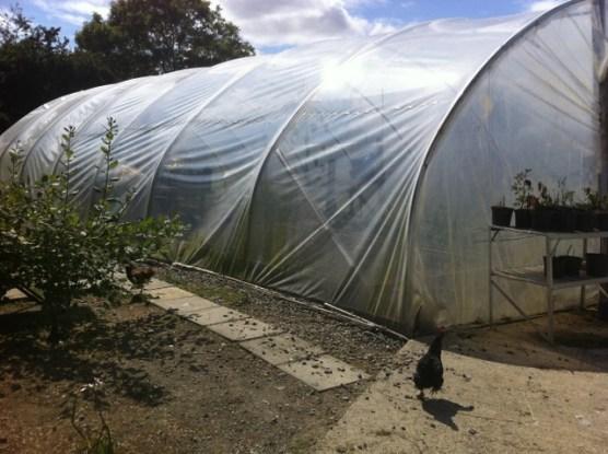 peter mcverry trust gardening (10)