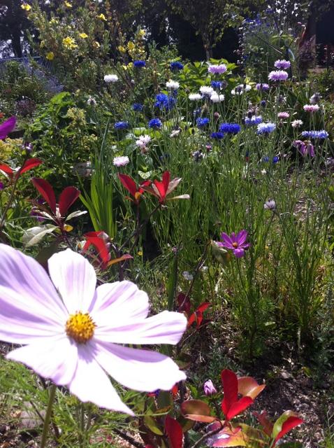 peter mcverry trust gardening (3)