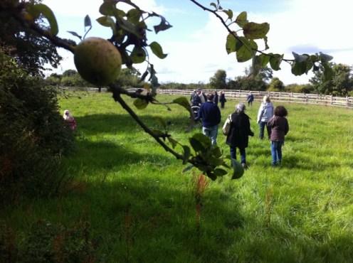 hedgerow walk heritage week 2011 (40)