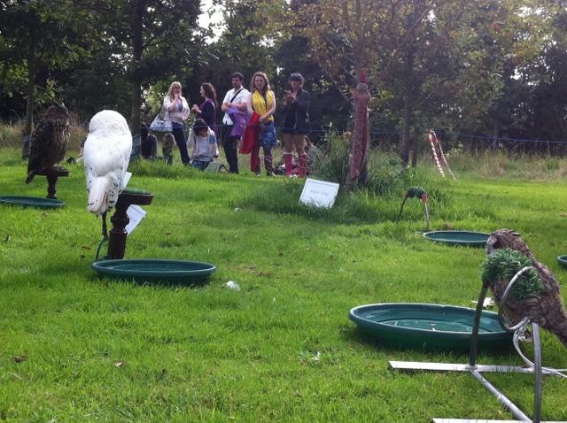 newgrange falconry - spirit of folk 2011 (25)