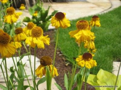 donegan landscaping, dublin (1)