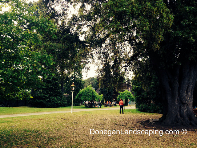 phoenix park trees (1)