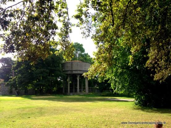 phoenix park trees (10)