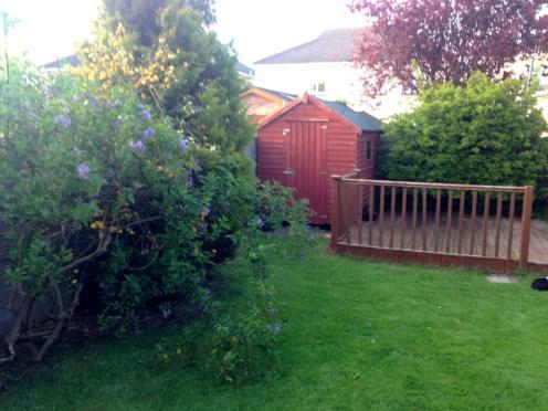garden before (2)