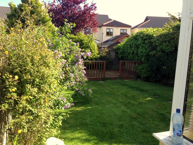 garden before (4)