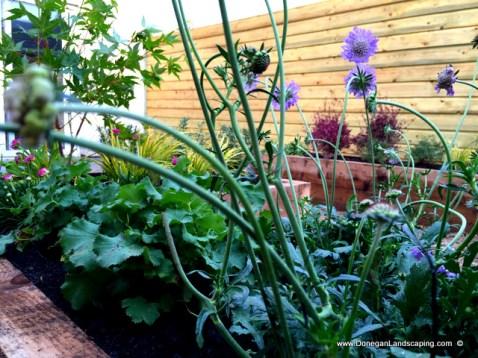 donegan landscaping dublin, back garden (9)