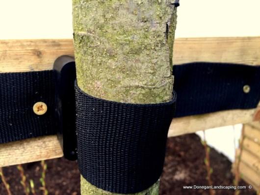 tree planting dublin, donegan (6)