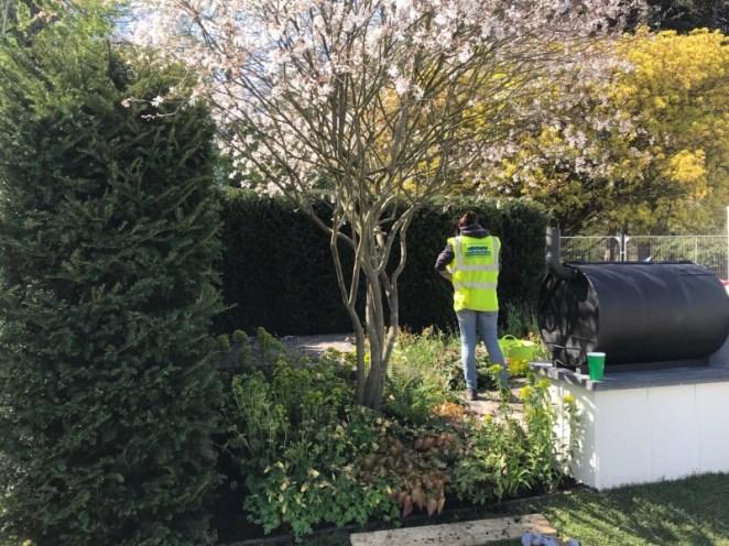 RHS garden perennial, donegan 2019