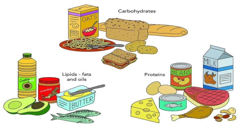 carbohydrates energy diet menu