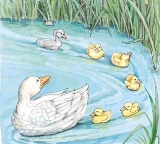 bebek buruk rupa berenang paling akhir cerita rakyat fabel