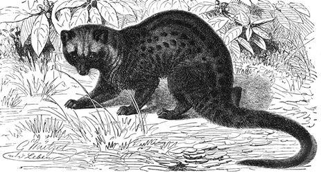 Kumpulan Dongeng Tentang Hewan Sang Musang dan Tikus Tua