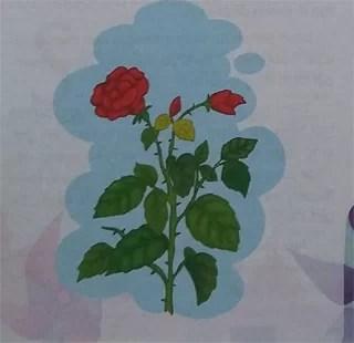 Cerita Rakyat Legenda Asal-Usul Mawar Merah