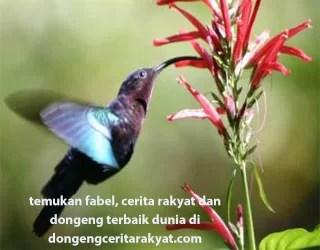 Dongeng Anak Nusantara Burung Bangau dan Burung Kolibri