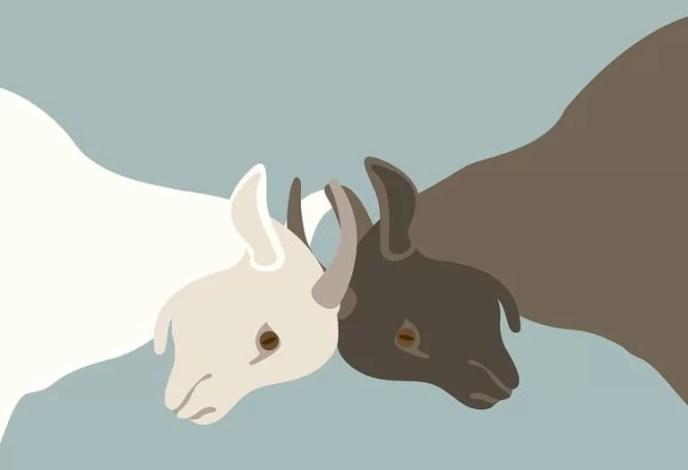 dua kambing bodoh