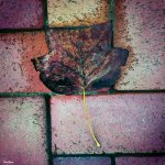"""""""Hojas de otoño"""" por Donibane"""