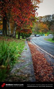 The colors of the autumn by Donibane