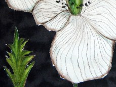 """""""White Poppies"""" - DETAIL 3, oil on dyed canvas - 47 x 66 cm, 2009"""