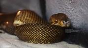 serpiente_1
